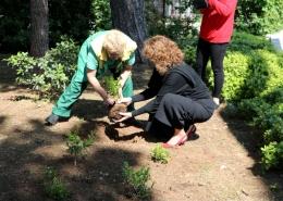 Zelena akupunktura Grada na Boninovu