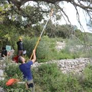 Orezivanje i nadzor hrast crnika u Žrnovu