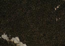Hibernacijska kolonija dugokrilih pršnjaka (Miniopterus schreibersii)