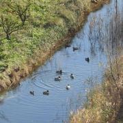 Zimsko prebrojavanje na ušću rijeke Neretve