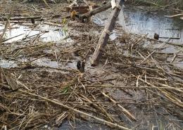 Akcija uklanjanja nelegalnih drvenih objekata