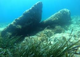 Posidonija, Posidonia oceanica